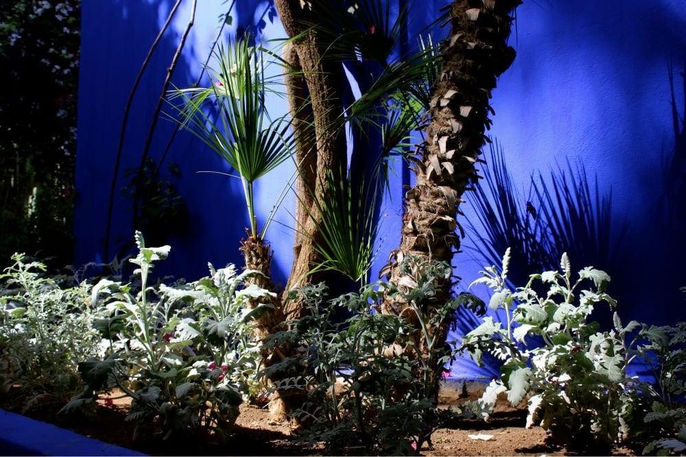 Khu vườn với tường màu Marjorelle Blue của Jardin Majorelle